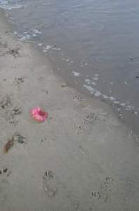 One of my favorite pictures from the trip.  A lonely magenta hibiscus flower, kissing the waves of a very angry ocean.