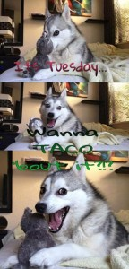 Yes, 'Punny Husky' , I do!